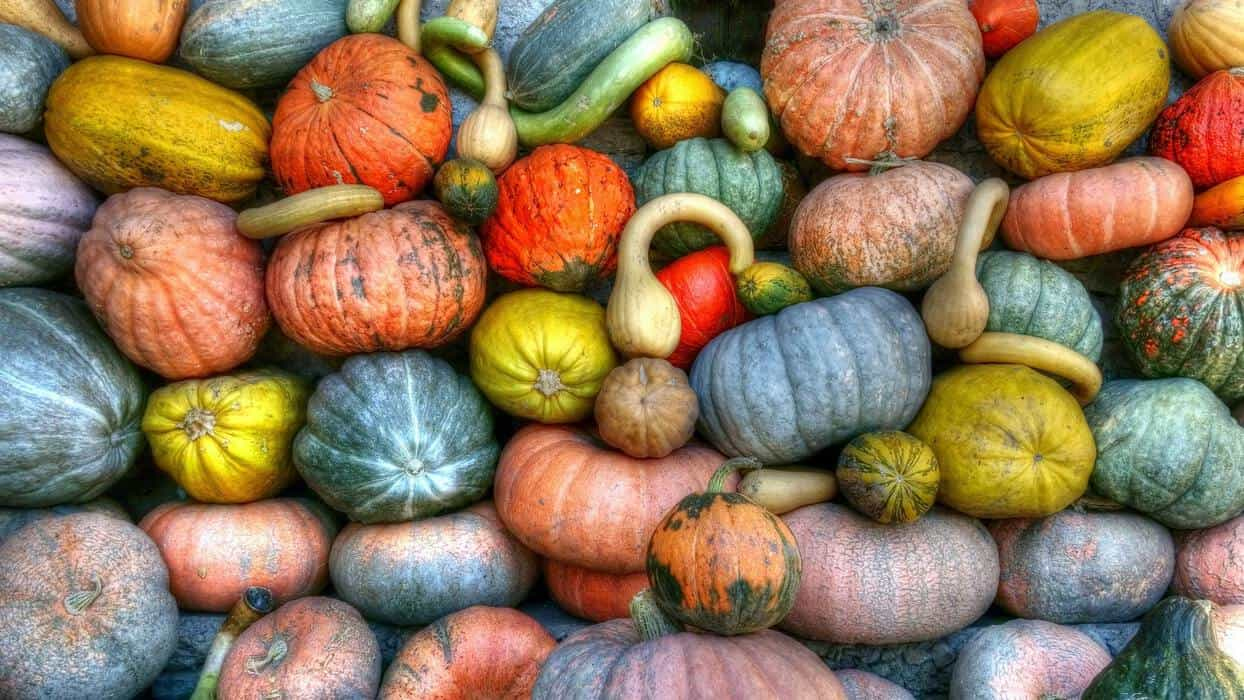 can i eat squash on the keto diet